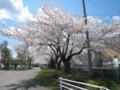長根公園の桜2011.4.29