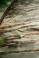 2011.7.17奥薬研で蛇