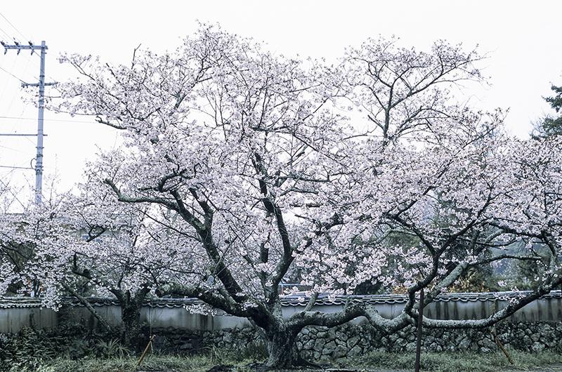 f:id:atsushimorimotophotos:20170422184847j:plain