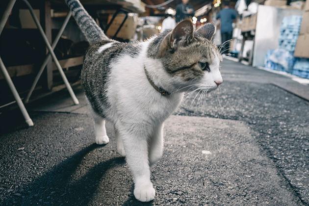 f:id:atsushimorimotophotos:20180429194120j:plain