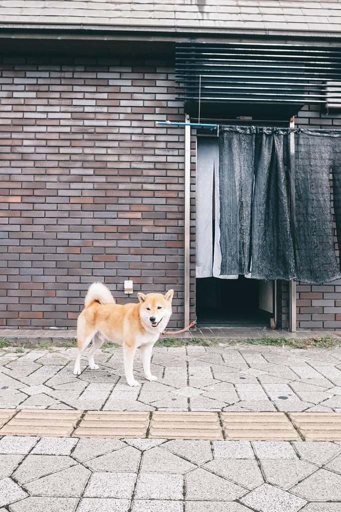 f:id:atsushimorimotophotos:20180921192422j:plain
