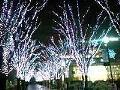 [散歩]つくば光の森