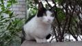 [猫] オフィス街の猫マリー