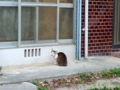 [旅][猫]安里、住宅街の猫(サッシの中にも猫が)