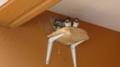 [旅]福岡六本松辺りで見かけたツバメの巣