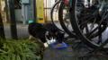 [猫]銀座の猫