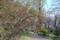 小石川植物園〜ウグイスカグラ(スイカズラ科)