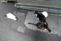 [猫]銀座路地裏の猫