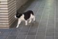 [猫]元町の猫