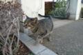 [猫]山手111番館の猫