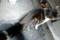 銀座路地裏の猫