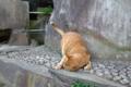 [散歩]護国寺の猫
