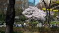 [散歩]新宿中央公園