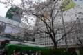 [散歩]渋谷駅の桜