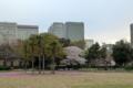 [散歩]日比谷公園の桜