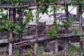 [猫]日比谷公園の猫