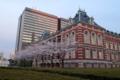 [散歩]桜田門、法務省旧本館と桜