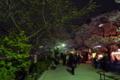 [散歩]外堀の桜
