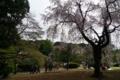 [散歩][公園]新宿御苑