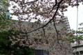 [散歩]西新宿ヒルトンの八重桜