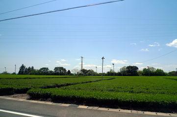うおがし銘茶 新茶塾2011〜静岡工場・茶畑見学ツアー