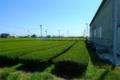 [旅][茶]うおがし銘茶 新茶塾2011〜静岡工場・茶畑見学ツアー