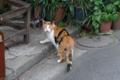 [散歩]新山下には猫がいっぱい