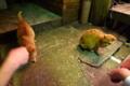 [猫]ビルの谷間に子猫