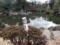 両国、旧安田庭園
