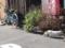 押上住宅街の猫