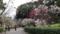 皇居東御苑、梅林坂