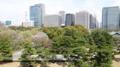 [散歩]皇居東御苑、本丸展望台からニの丸方向