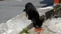 [旅]猫]沖縄市の猫