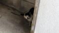[旅][猫]沖縄市の猫