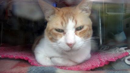 桜坂通りの猫