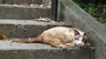 [旅][散歩]希望ヶ丘公園の猫