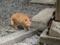 ビルの谷間に子猫