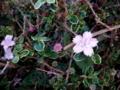 [散歩]有楽町ルミネ近くの街路樹には可愛い花が
