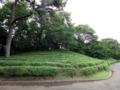 [散歩]皇居東御苑、茶畑(ツバキ科)