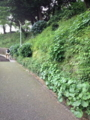 [散歩]日本の道100選山手本通り