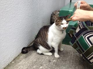 宇田川町の猫