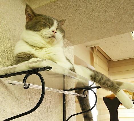 【悶絶キュン死注意報】アラサー独身男が「猫カフェ」に1人で行って涙した話。の画像