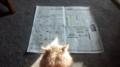 [cat, newspaper] My newspaper cat