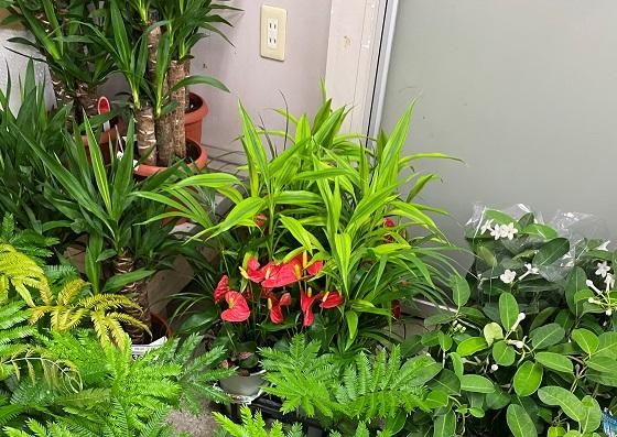 フラワーショップ潤 店内 観葉植物