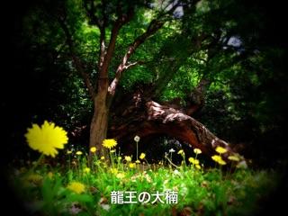 f:id:awa-otoko:20141018233240j:plain