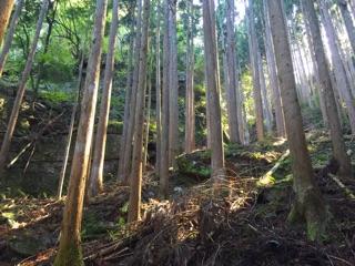 f:id:awa-otoko:20141027204534j:plain