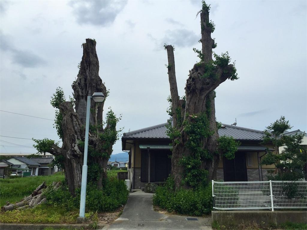 f:id:awa-otoko:20160612004525j:image