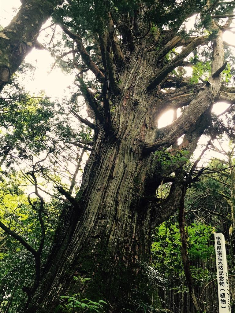 f:id:awa-otoko:20160627192905j:image