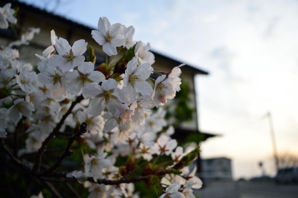 f:id:awashimashizentaiken:20180412093555j:plain