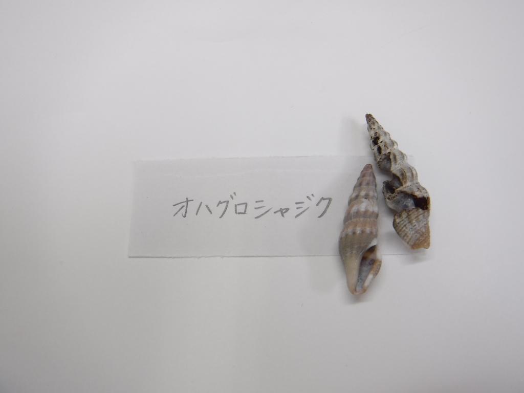 f:id:awashimashizentaiken:20190117084328j:plain